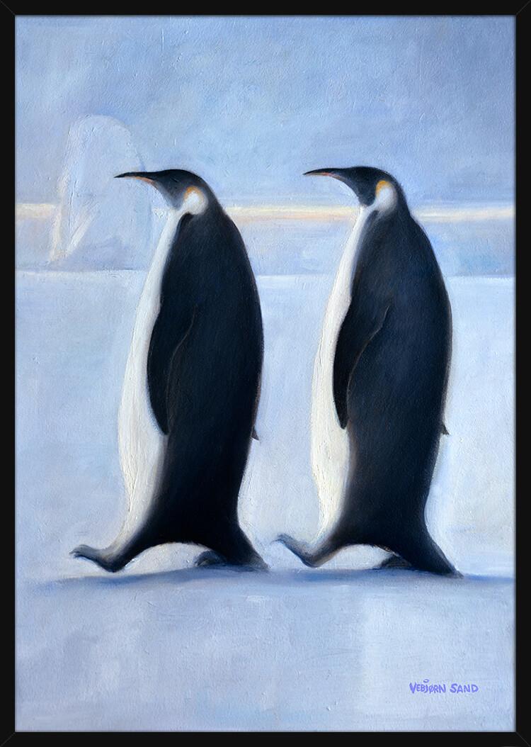 To pingviner i Antarktis, av kunstner Vebjørn Sand. Poster i en svart ramme.